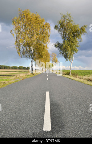Tree-lined country road with birch trees - Stock Photo