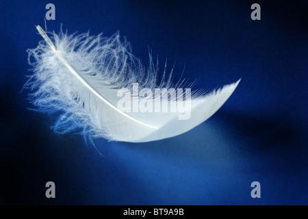 White feather - Stock Photo