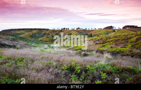 Heath and hills across Cannock Chase Country Park AONB in early summer (area of outstanding natural beauty) - Stock Photo