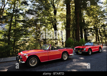 Classic old red vintage cars on a road surrounded by trees in the south Island of New Zealand - Stock Photo
