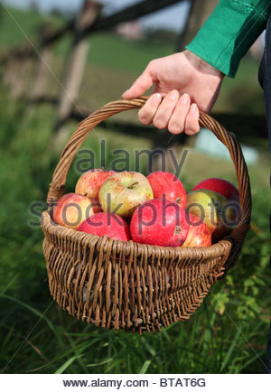 hand holding basket with apples - Stock Photo