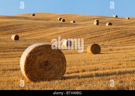 Hay rolls in a field near Pienza, Tuscany, Italy - Stock Photo