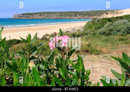 Bolonia Beach near the Roman site Baelo Claudia (2nd century BC through 6th century AD) on the Costa de la Luz in Cadiz province, southern Spain Stock Photo