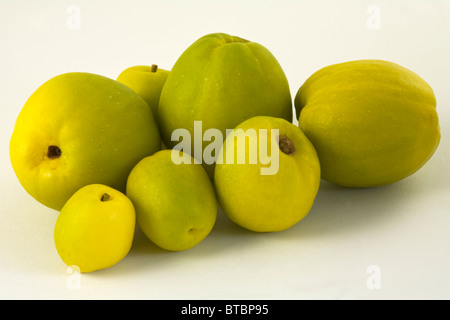 Quince Closeup Cut out on White Background - Stock Photo