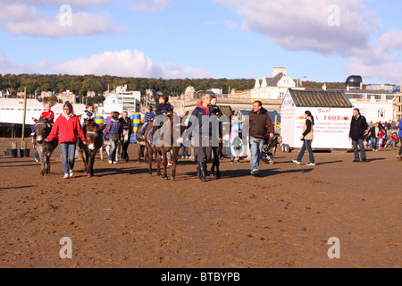 Donkey rides on the beach at Weston Super Mare Somerset in Autumn 2010 - Stock Photo