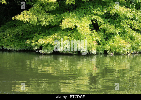baum am wasser am ufer on the banks stock photo royalty free image 32236147 alamy. Black Bedroom Furniture Sets. Home Design Ideas