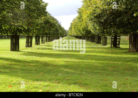 View of two straight rows of trees at Bushy Park, Surrey, England, UK - Stock Photo