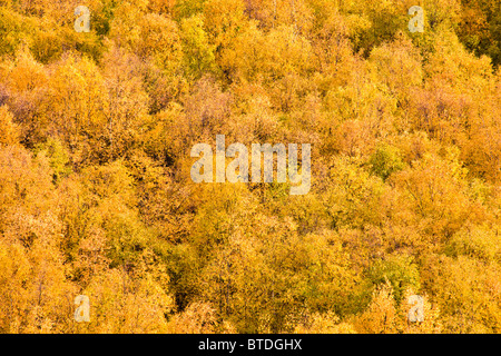 Changing colors during Fall of trees on the hillside of the Chugach Mountains above Bird Point along Turnagain Arm - Stock Photo