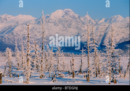 Hoarfrosted dead trees in a frozen pond along the Seward Highway, remnants of the 1964 earthquake saltwater infusion, - Stock Photo