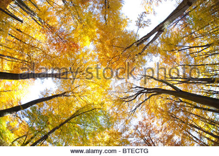 awesome bright autumn scenery - photo #29
