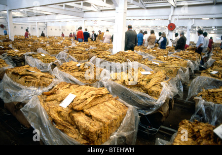 Tobacco being auctioned in Harare - Stock Photo