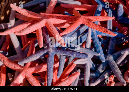 Coloured Star Fish for sale on a Market stand by Brighton Beach in the UK - Stock Photo