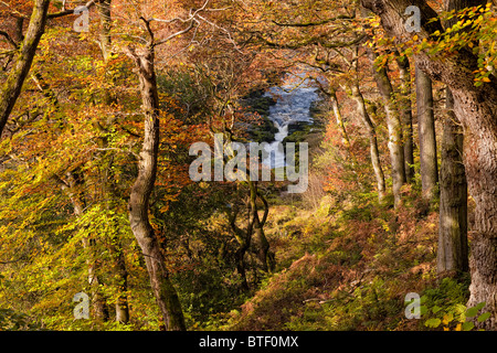 The Strid, a narrow section of the River Wharfe in the Strid Woods at Bolton Abbey, North Yorkshire. Autumn - Stock Photo