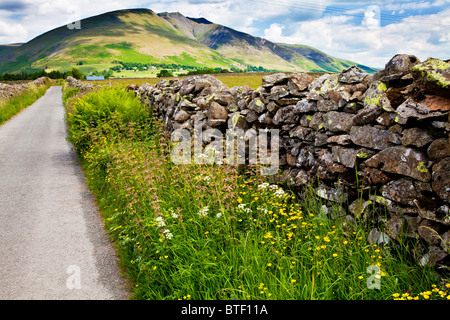 A dry stone wall and wildflowers near Castlerigg in the Lake District National Park, Cumbria, England, UK - Stock Photo