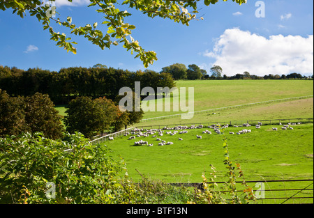 Pastoral view over pasture with sheep and rolling countryside in Wiltshire, England, UK - Stock Photo