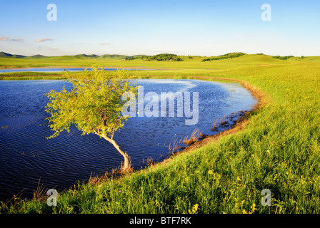 Lonely tree on the bank of lake - Stock Photo