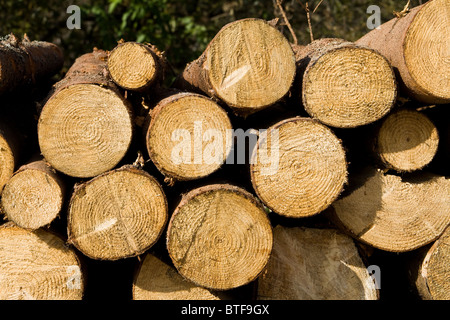 A stack of sawn logs waiting to be processed in Bieszczady - Stock Photo