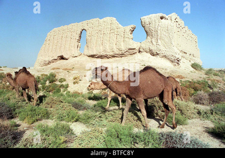 CAMELS IN SULTAN KALA, PART OF THE ANCIENT CITY OF MERV, TURKMENISTAN - Stock Photo