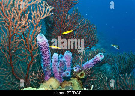 Coral Reef Underwater Purple Vase Sponge Stock Photo 53144354 Alamy