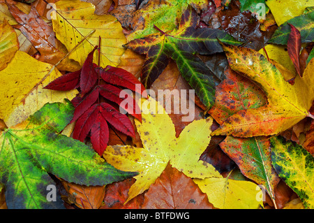 an abstract background of autumn leaves - Stock Photo