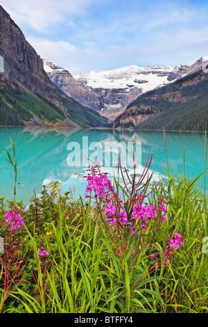Blooming Fireweed at Lakeside, Lake Louise, Alberta, Canada - Stock Photo