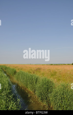 Typical marshland landscape,Baie de Somme, Picardy,France. - Stock Photo
