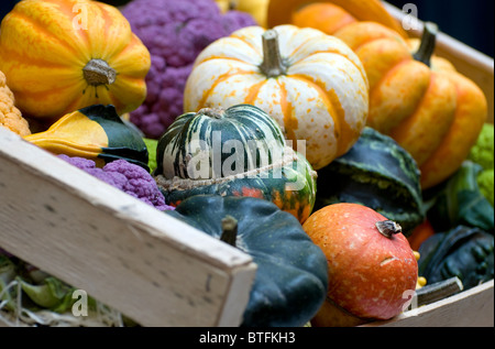 colourful gourds in wooden box - Stock Photo