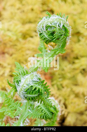 Young fern - Stock Photo