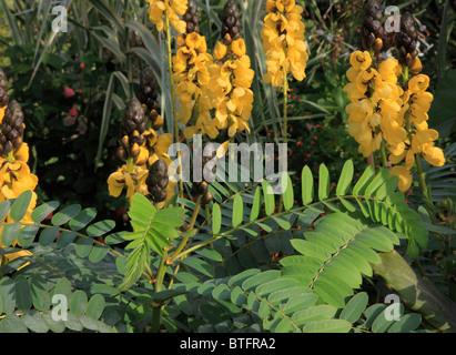 France, Paris, Jardin des Plantes, botanical garden, flowers, - Stock Photo