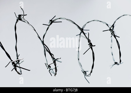 Barbed wire looped on a plain background - Stock Photo