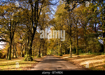 Avenue of trees in Autumn at the Camperdown Country Park main entrance in Dundee,UK - Stock Photo