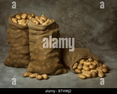 Three Burlap Sacks of Potatoes - Stock Photo