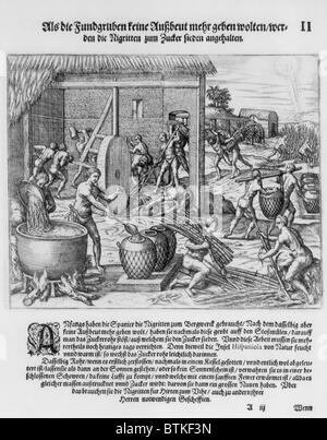 African slaves processing sugar cane on Hispaniola. 1595 engraving by Theodor de Bry show harvesting the cane, a - Stock Photo