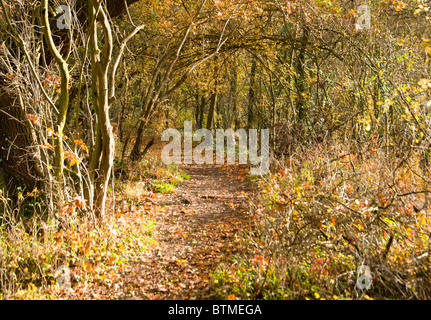 Autumn leaves cover a forest path in Arrow valley country park, Worcestershire, UK - Stock Photo