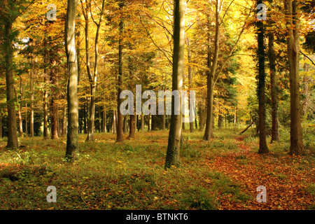 Autumn woodland scene on a sunny day - Stock Photo