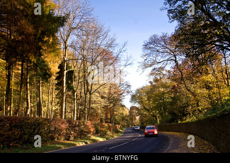 Cars on the main road passing through avenues of Autumnal trees in Dundee behind Camperdown Country Park north entrance,UK - Stock Photo