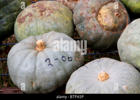 Australia, Denman, pumpkins - Stock Photo