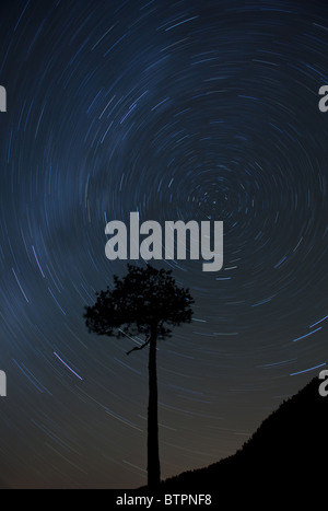 Startrails and lone pine tree at the foot of the mountain Andersnatten in Eggedal, Norway. - Stock Photo