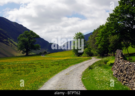 Path leading through a field of buttercups in the Lake District National Park, Cumbria. - Stock Photo