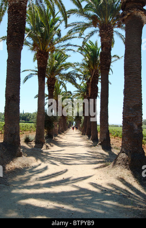 France, Saint-Tropez, Shadows of palm tree on dirt track and people in background - Stock Photo