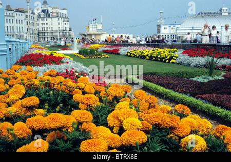 Eastbourne Sussex, seafront flower gardens, pier flowers garden couth coast coastal English resort promenade promenades - Stock Photo
