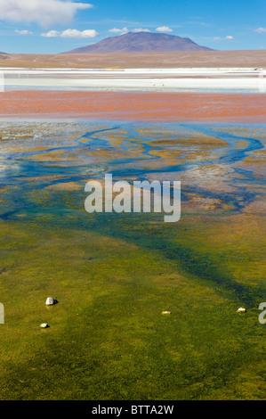 Laguna Colorada, Red Lagoon, Altiplano Shallow Salt Lake, Potosi, Bolivia