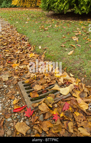 Blocked drains and grate developing due to autumnal leaf fall on a pebbled path - Stock Photo