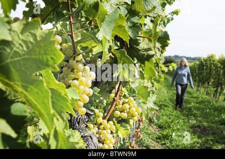 Lady walking through vineyard in Wiesenweg Palatinate Germany - Stock Photo