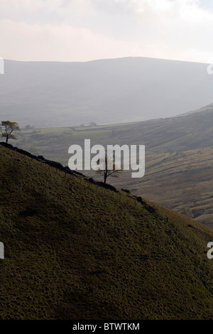 Tree on the skyline above near Jacob's Ladder above Kinder Scout Upper Booth Edale Peak District National Park Derbyshire - Stock Photo