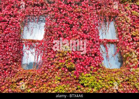 Georgian Dublin in Autumnal Colors - Stock Photo
