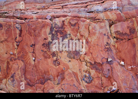 Boquillas formation limestone and shale twisted layers in Ernst Canyon, Chihuahuan Desert in Big Bend National Park, - Stock Photo