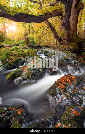 Tollymore Forest park, Northern Ireland. - Stock Photo