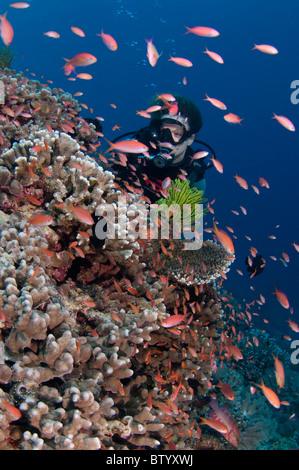 Diver swimming over reef, Sipadan, Sabah, Malaysia - Stock Photo