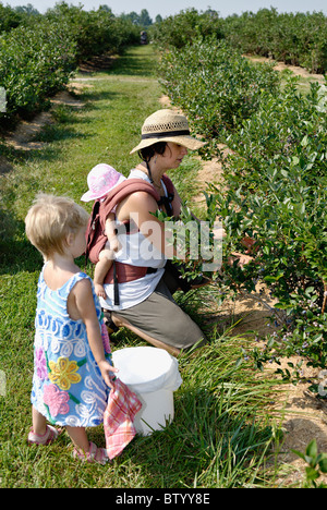 Mother with Baby on her Back and Young Daughter Picking Blueberries in Harisson Conty, Indiana - Stock Photo